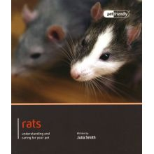 Rat Pet Friendly