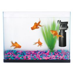 Fish 'R' Fun Aquarium Starter Kit
